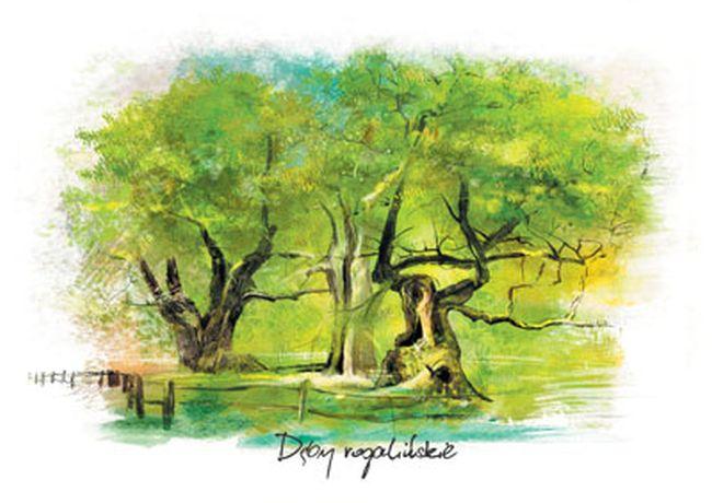 deby-rogalinskie-opis