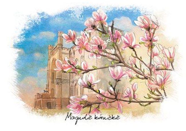magnolie-kornickie-opis
