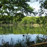 Jezioro z roślinością dookoła brzegu