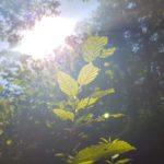 Łono przyrody w tle słońca