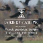 """plakat Dzikiego Dziedzictwa na szlakach regionu - wycieczka przyrodnicza z biologami """"Ptaki, zima, Pobiedziska"""" 24 listopada 2019 godz. 11"""