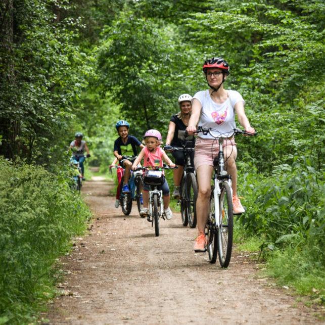 rowerzyści na leśnym szlaku