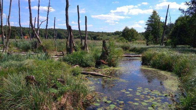 Na ścieżce Rola wody w przyrodzie