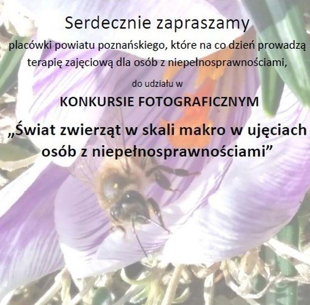 konkurs fotograficzny plakat