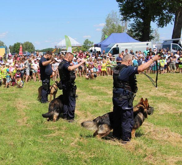 policjansci z psami